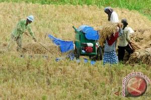 Aceh Tamiang tingkatkan produksi padi
