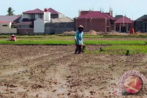 130 hektare sawah di tamiang butuh air