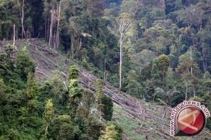 Hutan lindung di Abdya-Galus terancam gundul