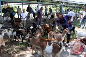 Hewan kurban mulai ramai dijajakan di Lhokseumawe