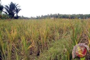 Kodim Aceh Utara kembangkan tanaman hidroponik