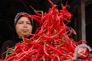 Harga cabe merah naik di Lhokseumawe Rp26.000/kg