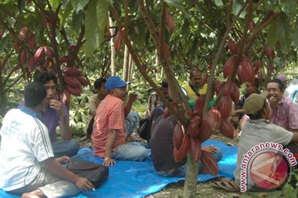 Petani kakao Aceh Utara dilatih sambung samping