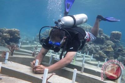 Tim Sar tanam terumbu karang di Abdya