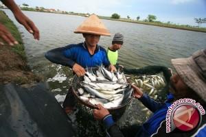 Harga bandeng di Lhokseumawe dipengaruhi hasil tangkapan