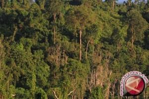 Perusak hutan Pining didenda Rp10 juta
