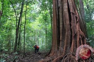 Masyarakat Pining bentuk pengawasan hutan