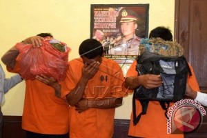Polisi ringkus pedagang pengedar ganja