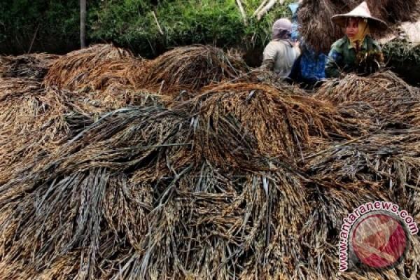 Petani Aceh Jaya butuh perlindungan banjir