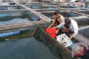 Pengamat: Aceh agar perkuat sektor hilir perikanan