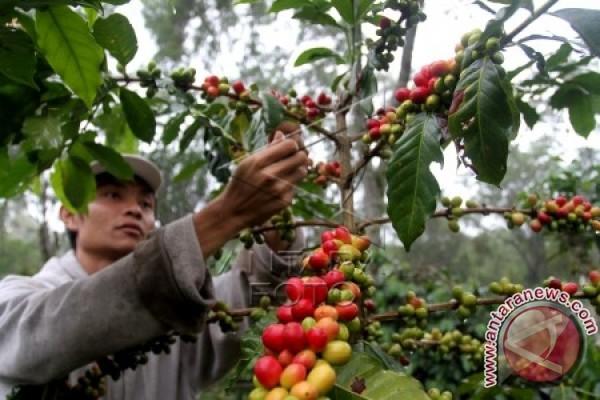 "Kemenperin dorong IKM kembangkan ""speciality coffee"""