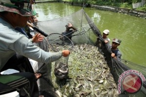 Prospektif petani Aceh Utara budidayakan ikan air tawar
