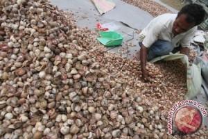 Harga pinang di Aceh Utara melonjak