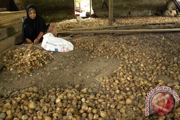 Harga beli biji pinang di Aceh Barat turun