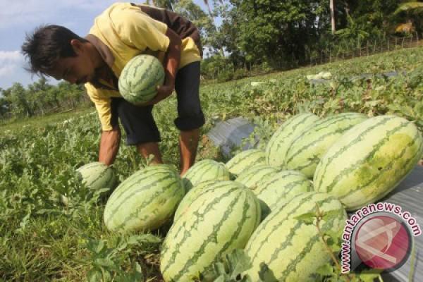 Buah-buahan jadi andalan ekspor Aceh