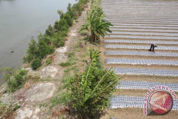 Hektaran lahan palawija rusak akibat pekerjaan proyek irigasi