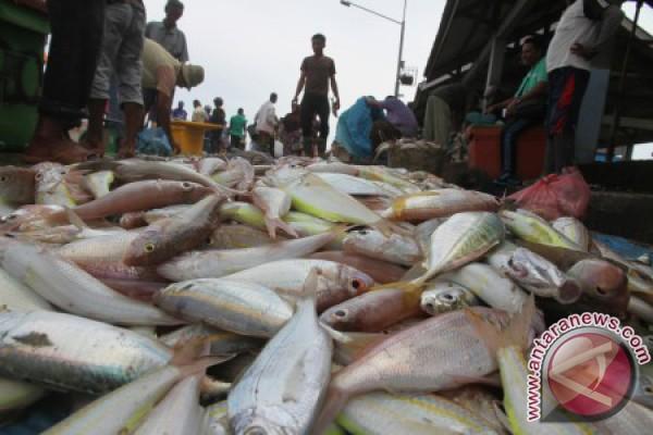 Cuaca buruk picu kenaikan harga ikan di Meulaboh