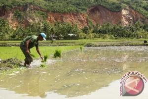 Petani Aceh Utara tanam padi sebelum Ramadhan