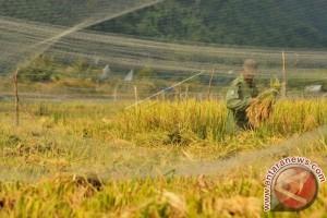 Dukungan TNI tingkatkan penyerapan gabah petani