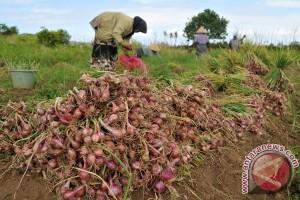 Harga bawang merah semakin turun di Lhokseumawe