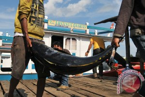Nelayan Aceh masuki musim panen ikan