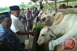 Bupati Aceh Tamiang serahkan 479 sapi bagi Kotanak