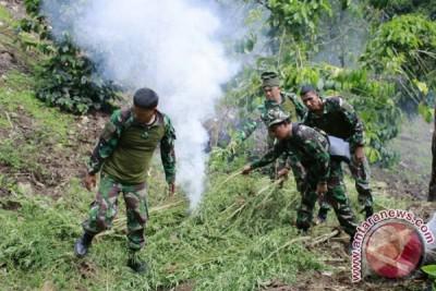 TNI temukan 2 hektare tanaman ganja di Nagan Raya