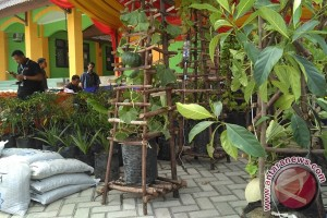 Universitas Teuku Umar buka 2,3 hektare kebun hortikultura