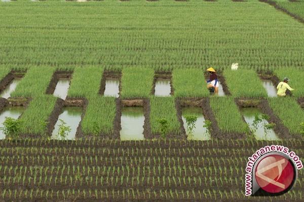 ADB setujui pinjaman 600 juta dolar AS untuk Indonesia