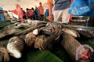 Stok ikan segar di Aceh Barat menipis