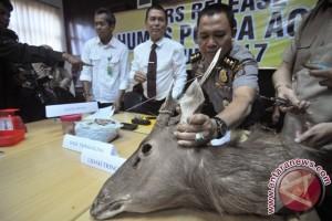 Masih ada indikasi perdagangan satwa di Aceh