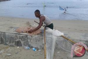 Nelayan Abdya panen udang rebon