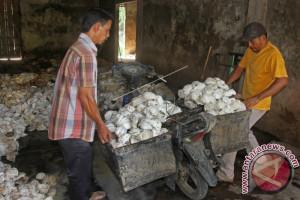Garga getah karet petani Aceh Barat naik