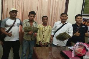 Polisi Singkil tangkap petani bawa ganja