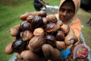 Harga komoditas perkebunan di Aceh Utara fluktuatif