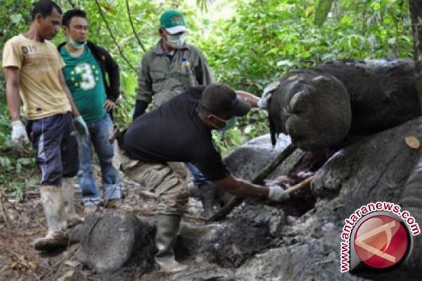 Bupati Aceh Timur minta usut kematian gajah