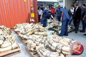 Polisi tangkap pembawa gading gajah ilegal