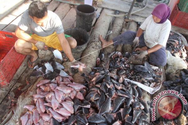 Permintaan Ikan Asin Kambing-Kambing