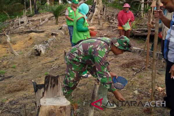 Gempita Aceh Barat tanam jagung bersama TNI