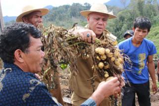 Bupati: sudah saatnya Takengon produksi bibit kentang