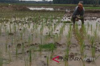 Ratusan hektare sawah rawan kekeringan