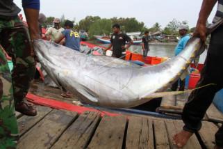 Ikan cakalang mendominasi hasil tangkapan nelayan
