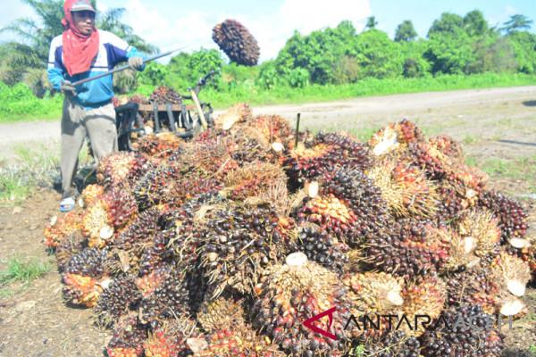 Petani minta Gubernur atasi anjloknya harga sawit