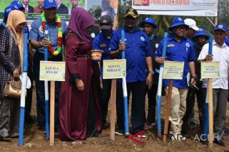 BNN tanam jagung pengganti ganja di Aceh