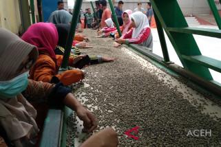Ekspor kopi lewat Aceh masih sangat minim