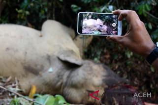 Polisi periksa petugas CRU terkait gajah mati