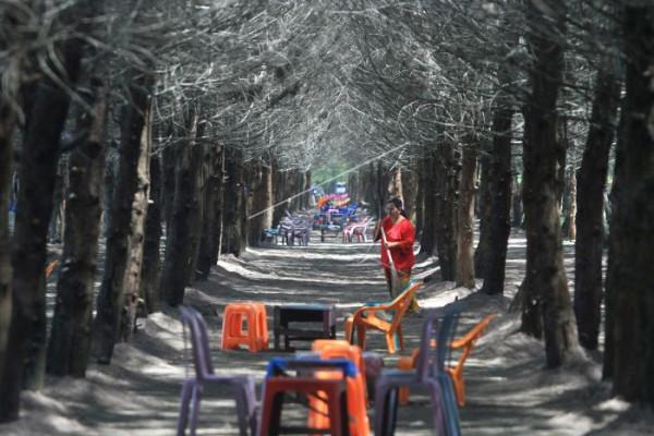 Wisata Hutan Cemara
