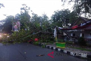 Sejumlah pohon tumbang di Langsa akibat hujan badai
