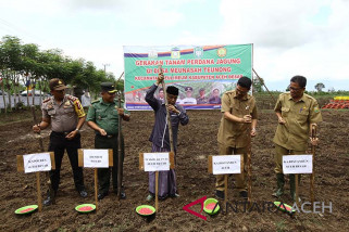 Pengembangan jagung Aceh Besar 2.645 hektare