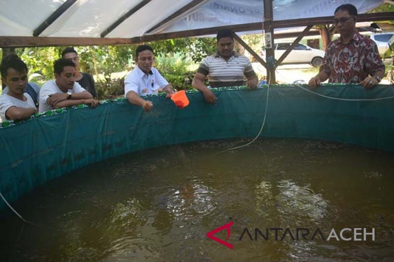 Pemuda Aceh singkil budidayakan lele sangkuriang